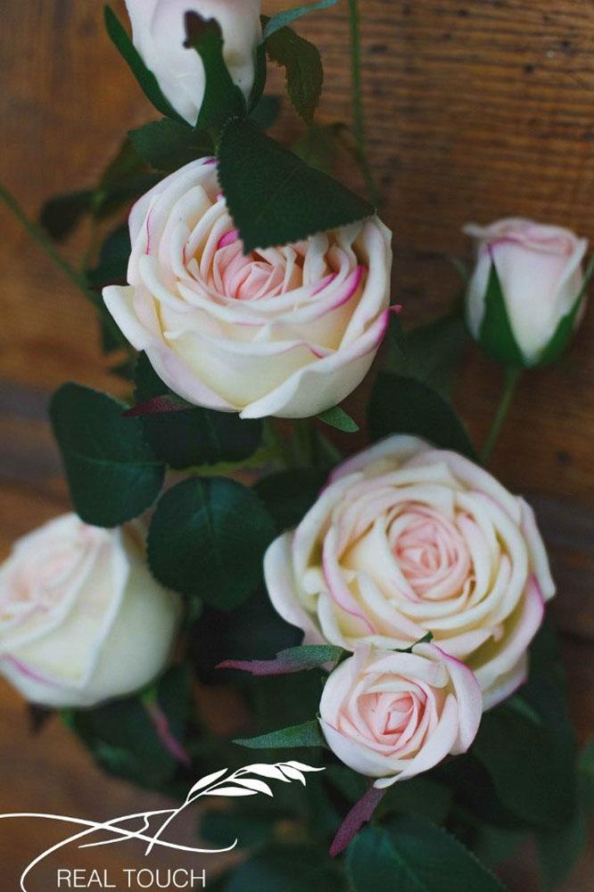 Peony Rose in der Farbe beig mit rosa kanten