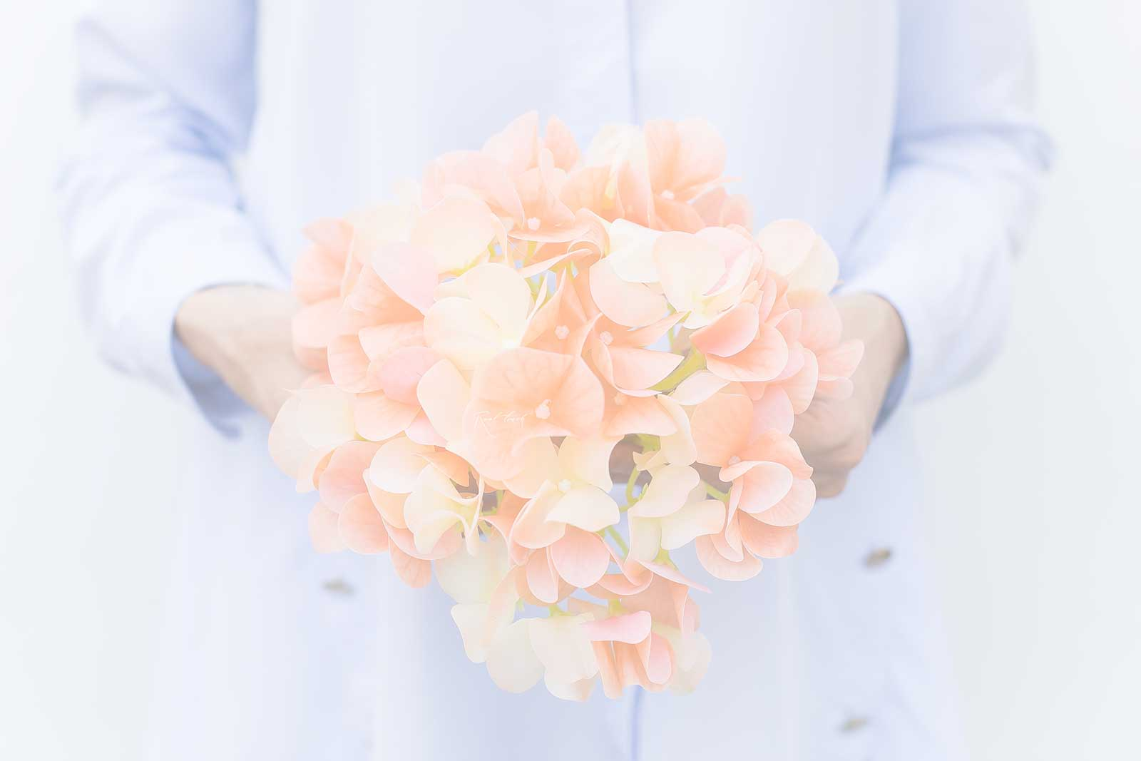 Kunstblume Hortensie Hintergrund