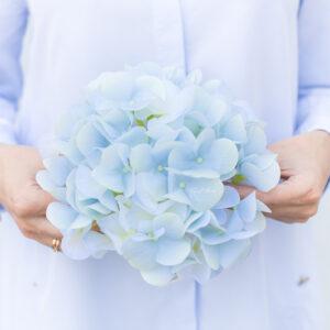 Seidenblume Hortensie in hellblau