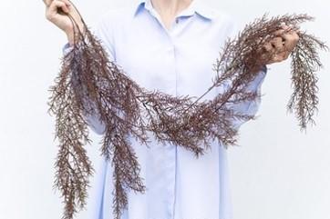 Asparagus Autumn (ID 137) Image