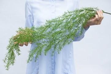 Asparagus Sprenger 98cm Green (ID 1382) Image