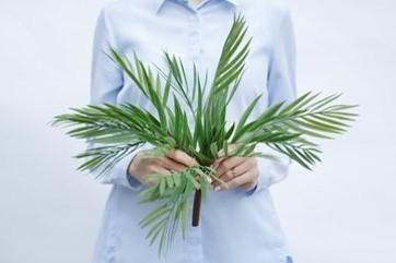 Bamboo Palm Tree Green (ID 1392) Image
