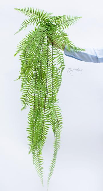 Nephrolepis Exaltate elongated 115cm Green (ID 1377) Image