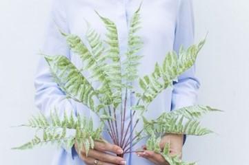 Woodwardia Dusty Green Image